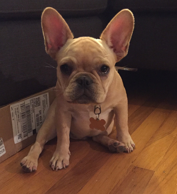 Related post: 5 Things to Know Before Getting a French Bulldog