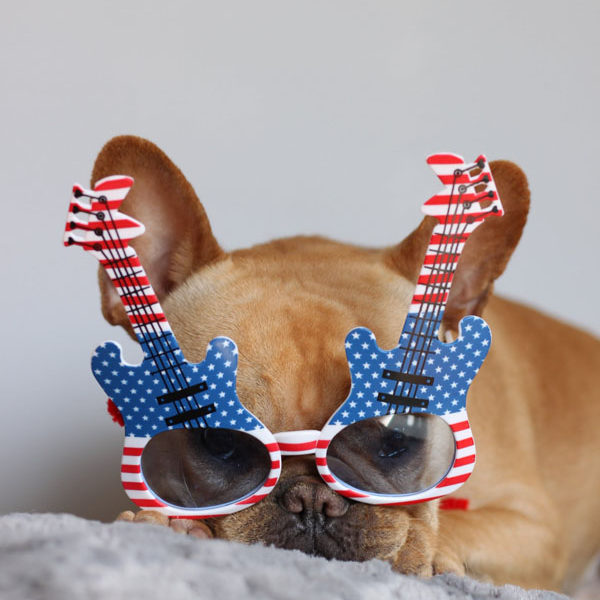 How to Photograph Dogs in Glasses | vincecincy.com
