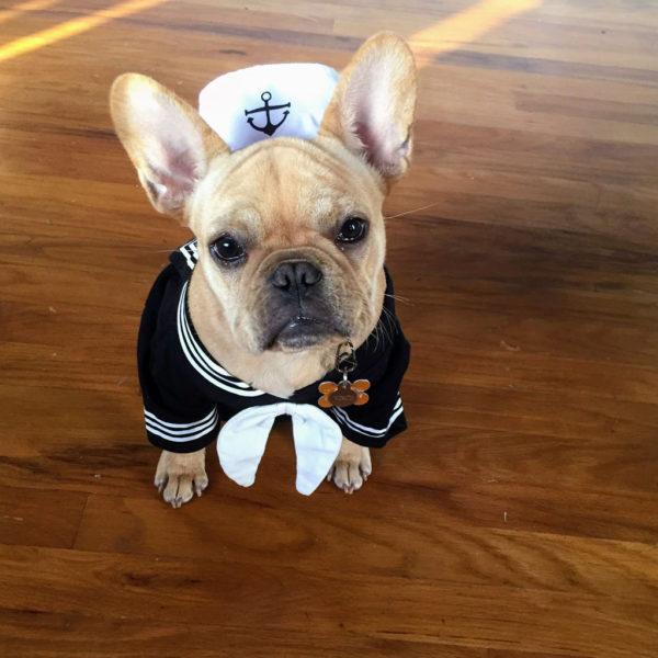 French Bulldog Sailor | Vincecincy.com