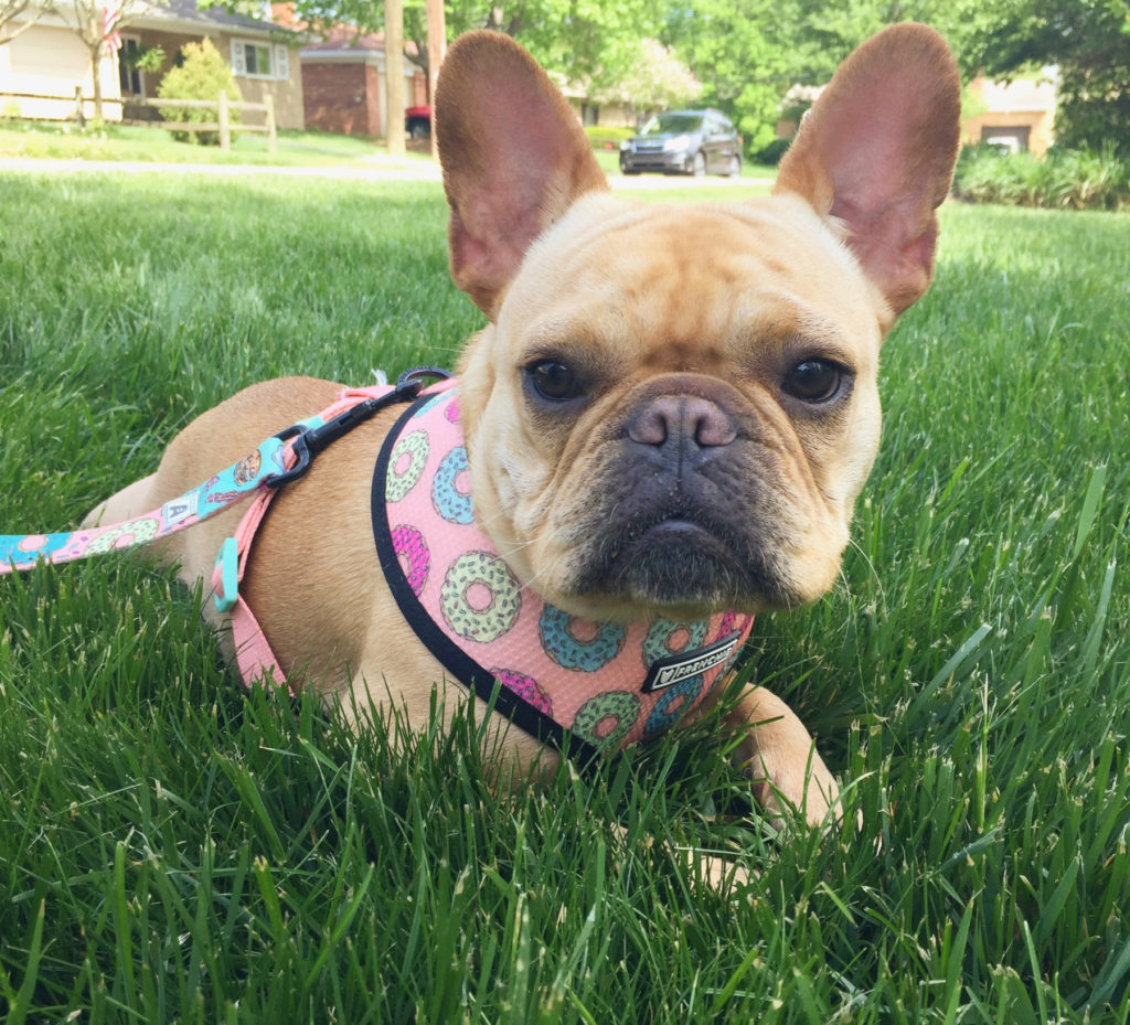 How to Eliminate Dog Odors | vincecincy.coma