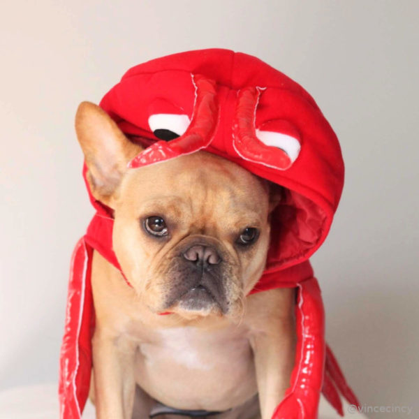 French Bulldog Lobster Halloween Costume
