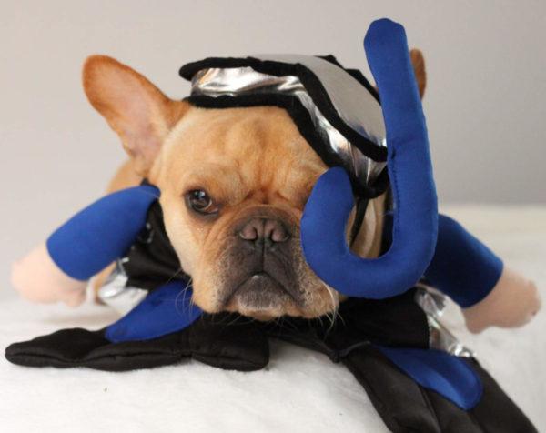 French Bulldog Scuba Diver Halloween Costume