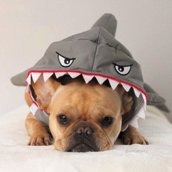 French Bulldog Shark Halloween Costume