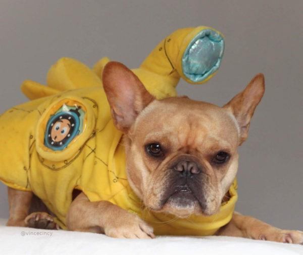 French Bulldog Submarine Halloween Costume