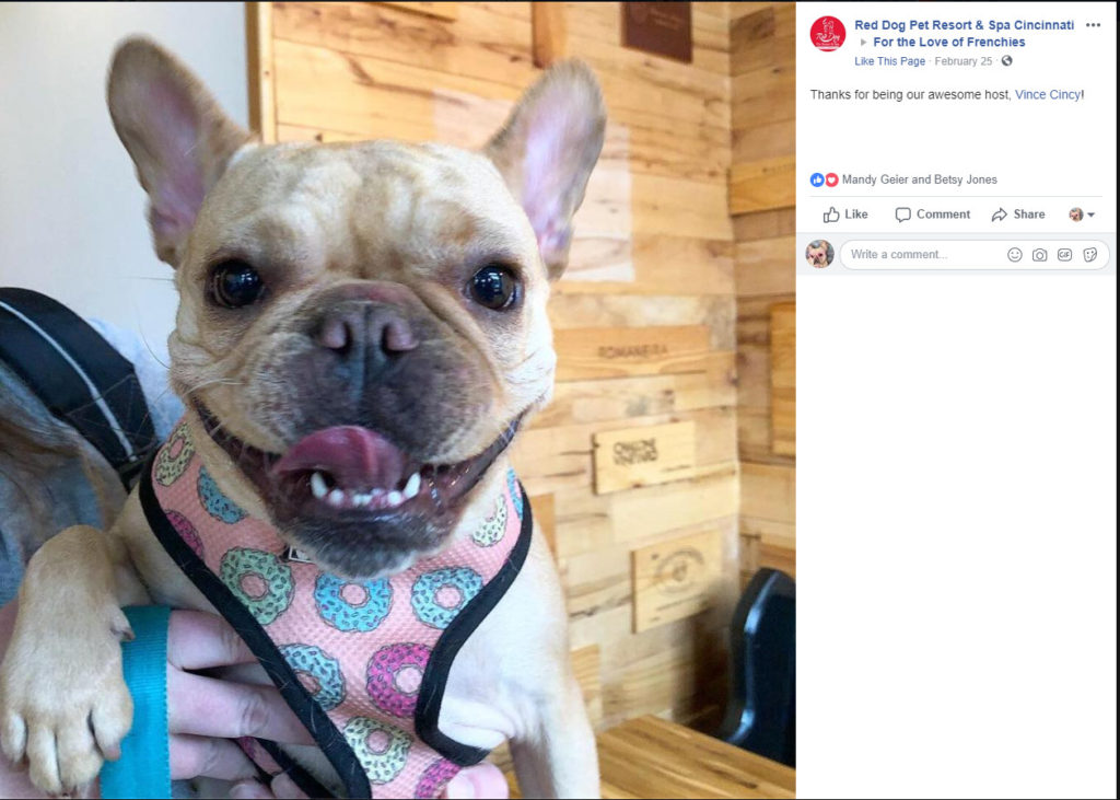 Vince Cincy and Red Dog Pet Resort For the Love of Frenchies event at Oakley Wines