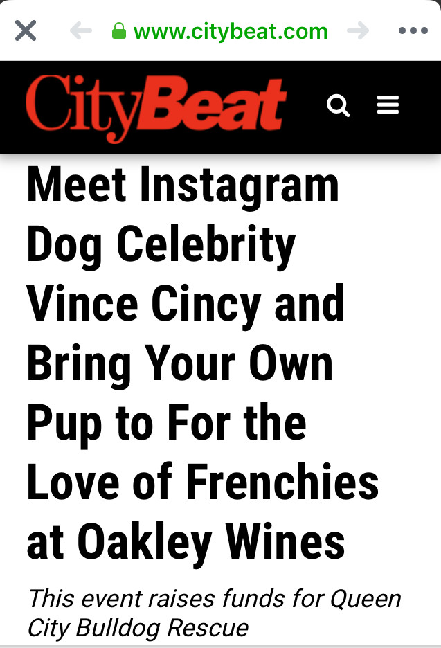 Vince CIncy French Bulldog at For the Love of Frenchies event at Oakley Wines
