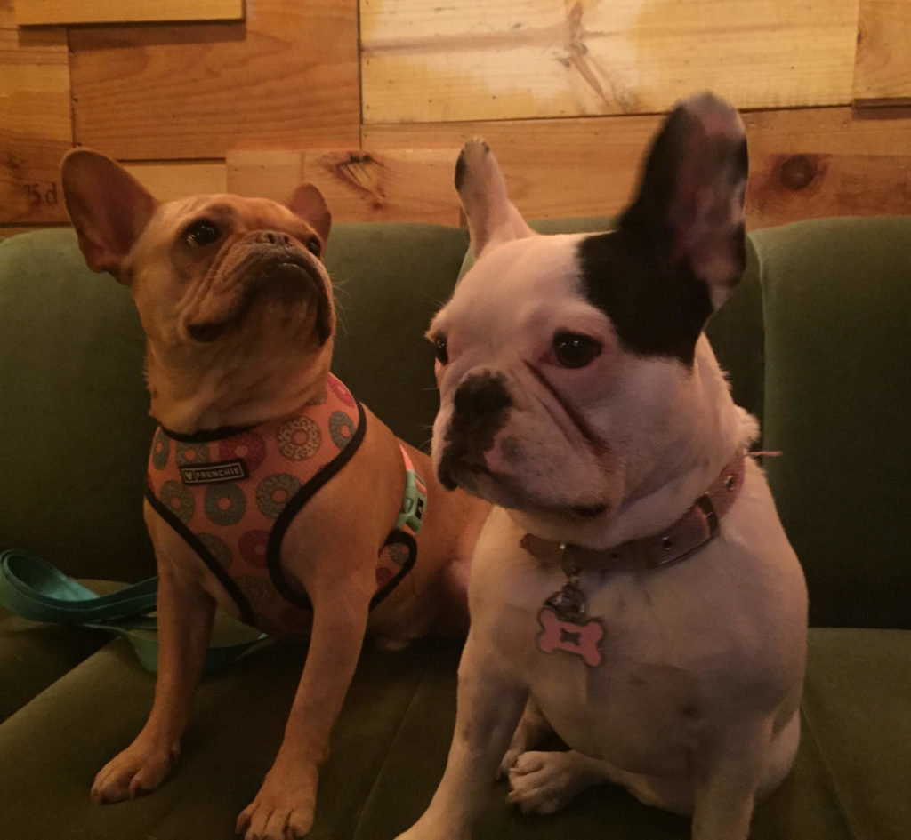 Vince CIncy and Thelma French Bulldog at For the Love of Frenchies event at Oakley Wines