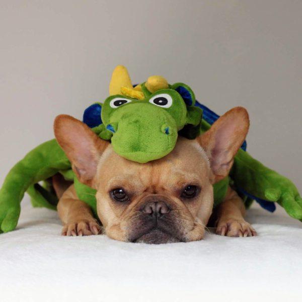 French Bulldog dressed as a green dragon VinceCincy