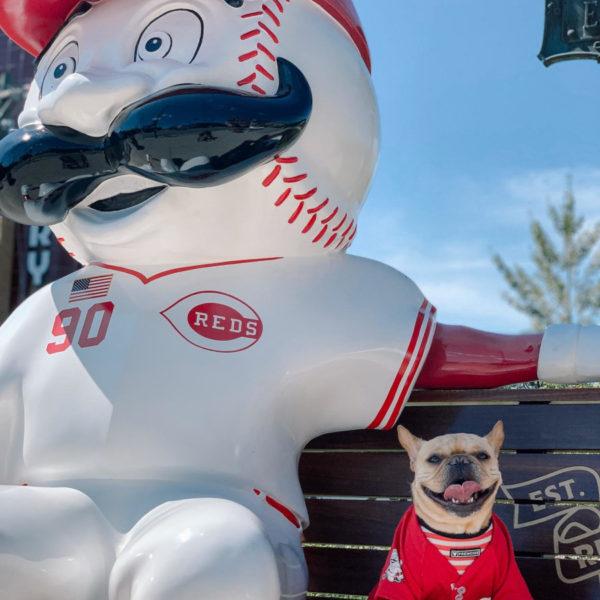 Vincecincy celebrating Cincinnati Reds 150th anniversary