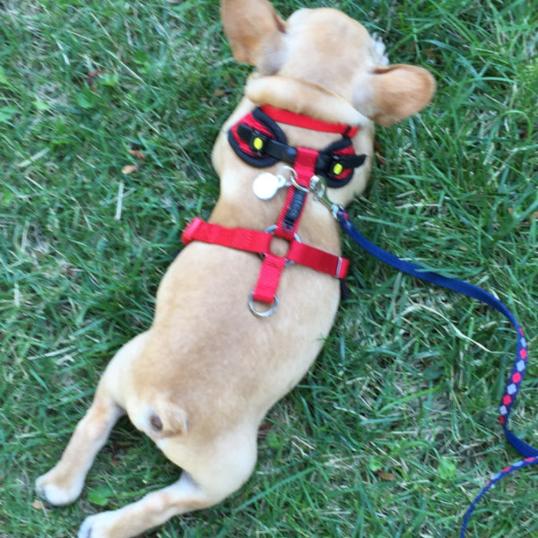 Vincecincy How to Stop Leash Pulling